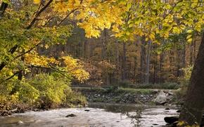 Картинка осень, лес, вода, деревья, поток, forest, Nature, trees, autumn, stream, fall