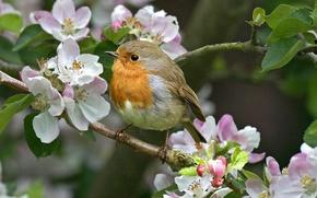 Обои весна, ветка, цветы, птица, природа