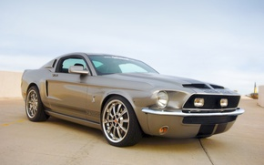 Обои Shelby, GT500KR, Mustang, Ford