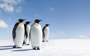 Картинка лед, пингвины, стоят