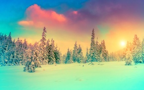 Обои ель, снег, зима, природа, фото, небо, пейзаж