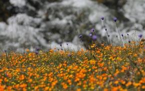 Картинка цветы, полевые цветы, желтые, природа, васильки, сиреневые