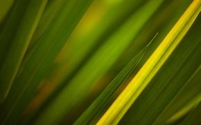 Картинка трава, зелёный, текстуры, green textures