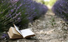 Картинка цветы, фон, книга, лаванды