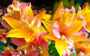 Картинка линии, цветы, лилия, лепестки, сад, клумба