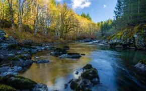 Картинка осень, лес, река, камни, Канада, Gordon River