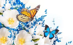 Картинка цветы, лепестки, крылья, бабочка, коллаж, тюльпаны