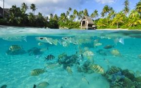Картинка вода, прозрачность, рыбы, океан, лагуна, under the lagoon