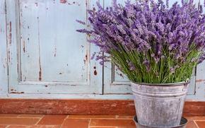 Картинка цветы, натюрморт, лаванда, фиолетовые цветы