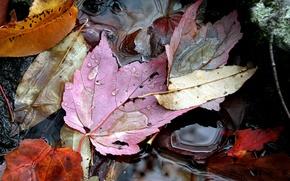 Обои осень, листья, вода