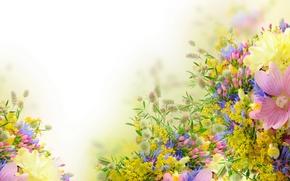 Картинка цветы, нежность, мальвы