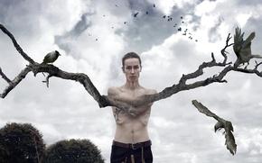 Обои дерево, птицы, человек