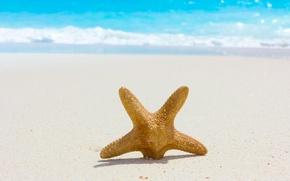 Картинка море, пляж, лето, природа, summer, beach, sea, nature, sand, starfish