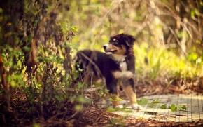 Картинка лес, собака, щенок