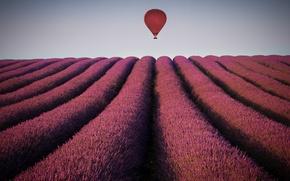 Картинка поле, небо, воздушный шар, горизонт, лаванда