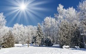 Обои снег, зима, иней, солнце, деревья, Природа, лес