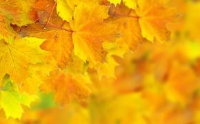 Картинка осень, листья, боке