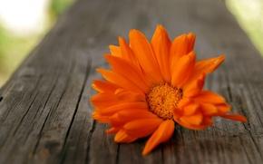 Картинка цветок, оранжевый, дерево, лепестки
