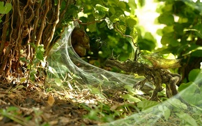 Обои Растение, маскировка, паутина