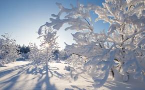 Картинка зима, снег, деревья, Канада, Canada, Northwest Territories, Северо-Западные территории, Kakisa, Какиса