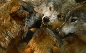 Картинка животные, реализм, хищники, стая, волки, живопись, animals, art, орден, wolves, realistic, paintings, The Order of …