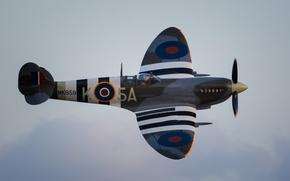 Картинка истребитель, британский, Spitfire, одномоторный