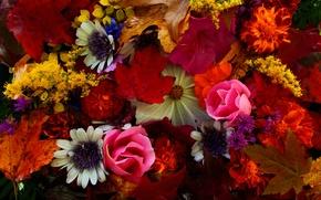 Картинка осень, листья, букет, лепестки, натюрморт