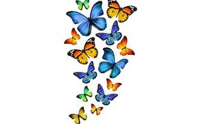 Картинка синие, желтые, yellow, butterflies, blue, бабочки, green, зеленые