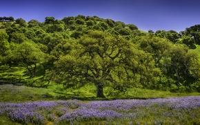 Картинка деревья, цветы, луг, люпин