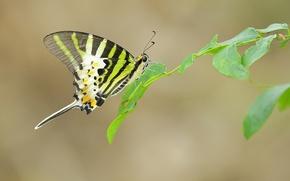 Картинка листья, бабочка, крылья, ветка, усики, веб, хоботок