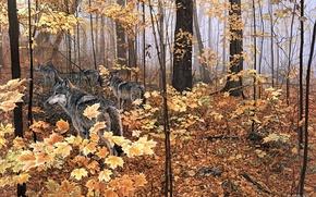 Картинка осень, лес, животные, природа, желтые листья, волки, клён, живопись, Autumn Maples, Ron S.Parker