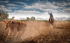 Картинка horse, farm, rodeo, Cowgirl, ropping cattle