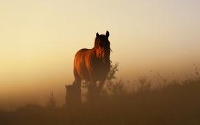 Картинка grass, twilight, sunset, hill, horses, dusk, vegetation
