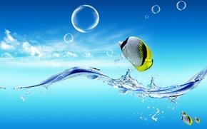Обои небо, рыбки, Вода