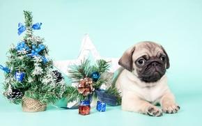 Картинка елка, мопс, щенок, Новый год