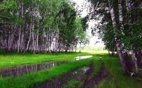 Картинка лето, дождь, Лес, лужа