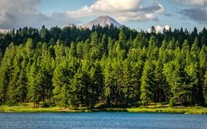 Картинка лес, деревья, озеро, гора, Colorado