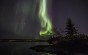 Обои Aurora Borealis, северное сияние, панорама, берег, ночь, небо, звезды, лес
