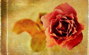Обои стиль, фон, роза