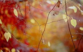 Обои ветки, листья, капли, после дождя