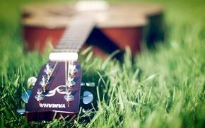Картинка Гитара, Yamaha, На траве