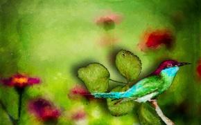 Картинка птица, Nature, Bold Colors