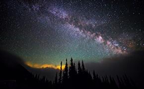 Картинка небо, космос, звезды, деревья, ночь, пространство, млечный путь