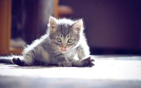 Обои усы, котенок, фотограф ann_ann, мило, глаза