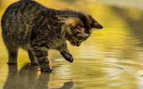 Картинка вода, отражение, игра, котёнок