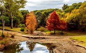 Картинка Природа, Мост, Осень, Деревья, Река, Парк, Uruguay, Minas, Lavalleja