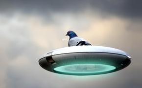 Картинка НЛО, Голубь, Тарелка