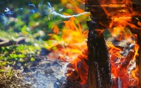 Картинка огонь, пламя, костер