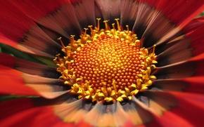 Картинка цветок, макро, желтый, 151
