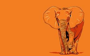 Обои гигант, оранжевое, слон